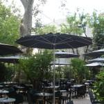 Kuğu Branda Şemsiye